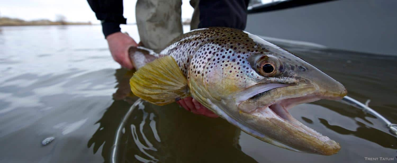 Wyoming fly fishing report north platte lodge for Fly fishing blog
