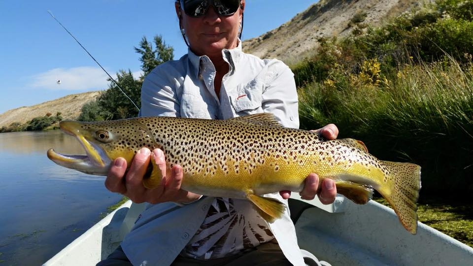 Wyoming fly fishing and grey reef and miracle mile fishing for North platte fishing report