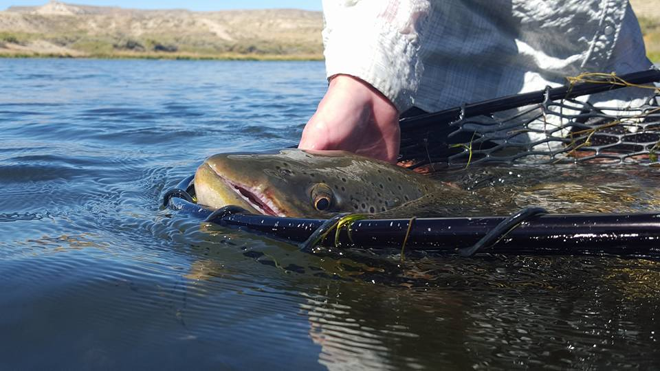 Wyoming grey reef fly fishing north platte lodge for North platte fishing report